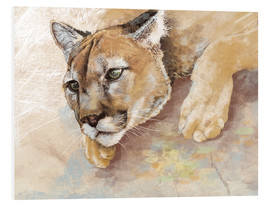 Foam board print  Captived Mountain Lion - Ashley Verkamp
