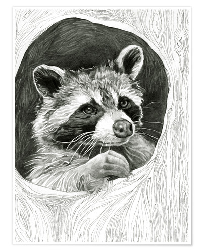 Premium poster Raccoon In A Hollow Tree Sketch