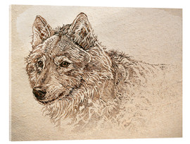 Acrylic print  The Gray Wolf - Ashley Verkamp