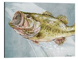 Aluminium print  Magnificent Largemouth Bass - Ashley Verkamp