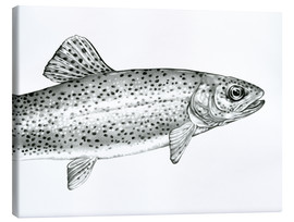 Canvas print  Rainbow Trout Sketch - Ashley Verkamp