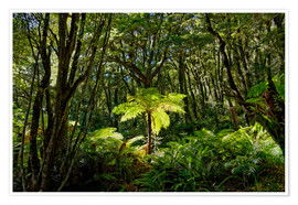 Premium poster Tree fern in the rainforest New Zealand