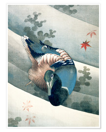 Premium poster Duck Swimming in Water