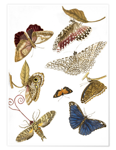 Premium poster Moths and butterfiles