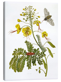 Canvas  A moth and a caterpillar - Maria Sibylla Merian
