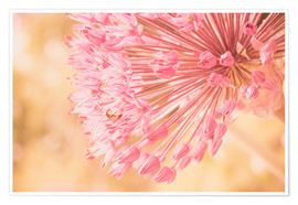 Premium poster Creamy Summer - Allium in Pink