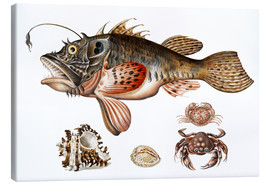 Canvas print  Deep-sea fish, crabs and sea snails - Maria Sibylla Merian
