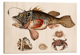 Wood print  Deep-sea fish, crabs and sea snails - Maria Sibylla Merian