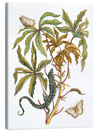 Canvas print  cassava with crocodile and butterfly metamorphosis - Maria Sibylla Merian