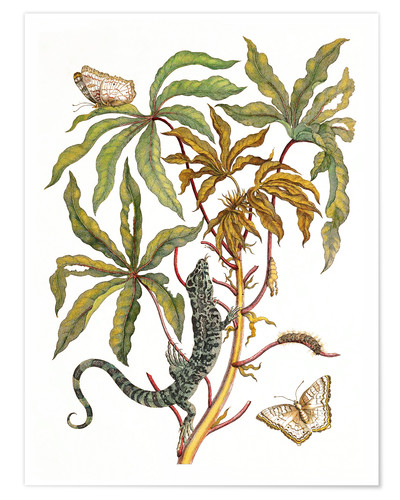 Premium poster Cassava, lizard and butterfly