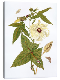 Canvas print  musk plant with lepidoptera metamorphosis - Maria Sibylla Merian