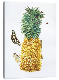 Canvas print  pineapple - Maria Sibylla Merian