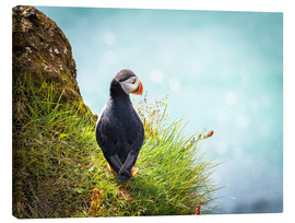 Sascha Kilmer - Puffin looking at the Sea