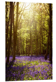 Foam board print  Sunny forest with bluebells - Sybille Sterk