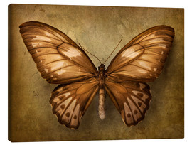 Canvas  Brown butterfly - Elena Schweitzer