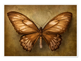 Premium poster Brown butterfly