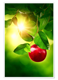 Premium poster Red apple
