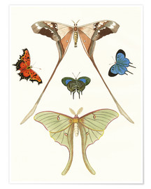 Premium poster Different kinds of butterflies