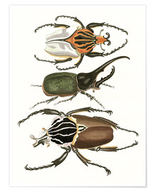 Premium poster Large and rare beetles