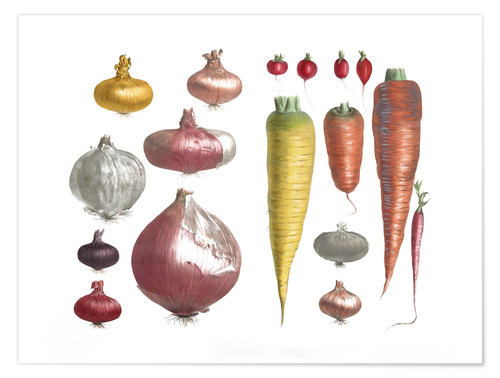 Premium poster Various Vegetables, including onions and carrots