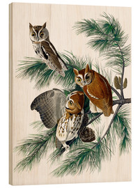Wood print  Three owls - John James Audubon