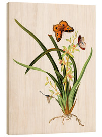 Wood  Butterflies and a dragonfly on a plant