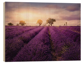 Wood print  Lavender field at sunset, Provence - Elena Schweitzer