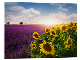 Acrylic print  Lavender and sunflowers fields , Provence - Elena Schweitzer