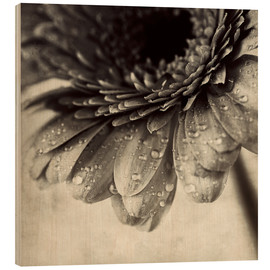 Wood print  Close up abstract of gerbera flower