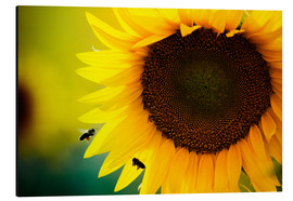 Two bees in sunflower