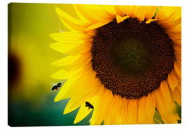 Canvas print  Two bees in sunflower
