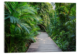Acrylic print  jungle trail