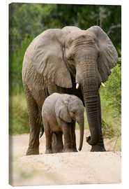 Canvas print  Mother and calf