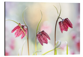 Aluminium print  Snakes head fritillary - Mandy Disher
