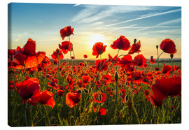 Canvas print  Poppies in the Evening - Steffen Gierok