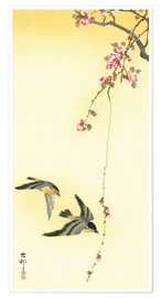 Premium poster  Starlings and Cherry Tree - Ohara Koson
