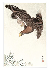 Premium poster Eagle in Flight
