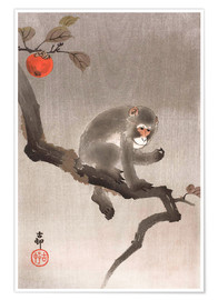 Premium poster Monkey in a Tree