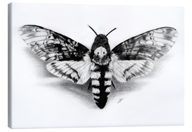 Canvas print  Death Head Hawk Moth - Christian Klute
