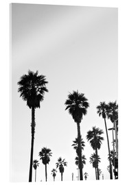 Acrylic print  Boulevard under the palm trees - Finlay and Noa