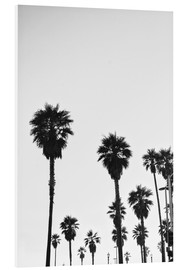 Foam board print  Boulevard under the palm trees - Finlay and Noa