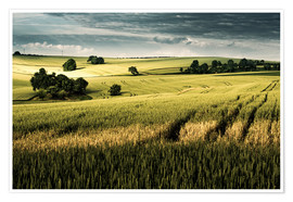 Premium poster  Field in summer, Germany - Dennis Fischer