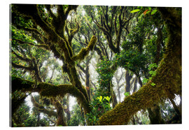 Acrylic print  Old virgin forest, laurel, Madeira - Dennis Fischer