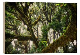 Wood print  Old virgin forest, laurel, Madeira - Dennis Fischer