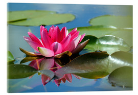 Acrylic glass  Water lily with reflection - GUGIGEI