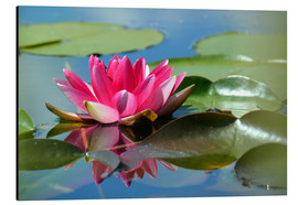 Aluminium print  Water lily with reflection - GUGIGEI