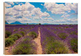 Wood print  Lavender field on the Plateau de Valensole in Provence - Thomas Klee