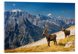 Acrylic glass  Two Alpine Ibex in front of Mount Watzmann - Dieter Meyrl