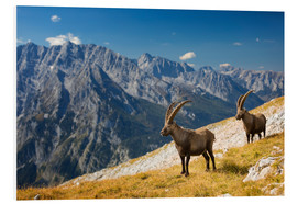 Dieter Meyrl - Two Alpine Ibex in front of Mount Watzmann