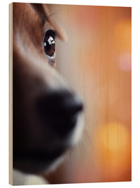 Wood print  PERSPECTIVE - Jack Russel eye - Janina Bürger